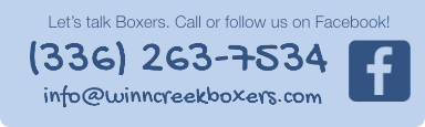 Let's talk Boxers. Call or follow us on Facebook!